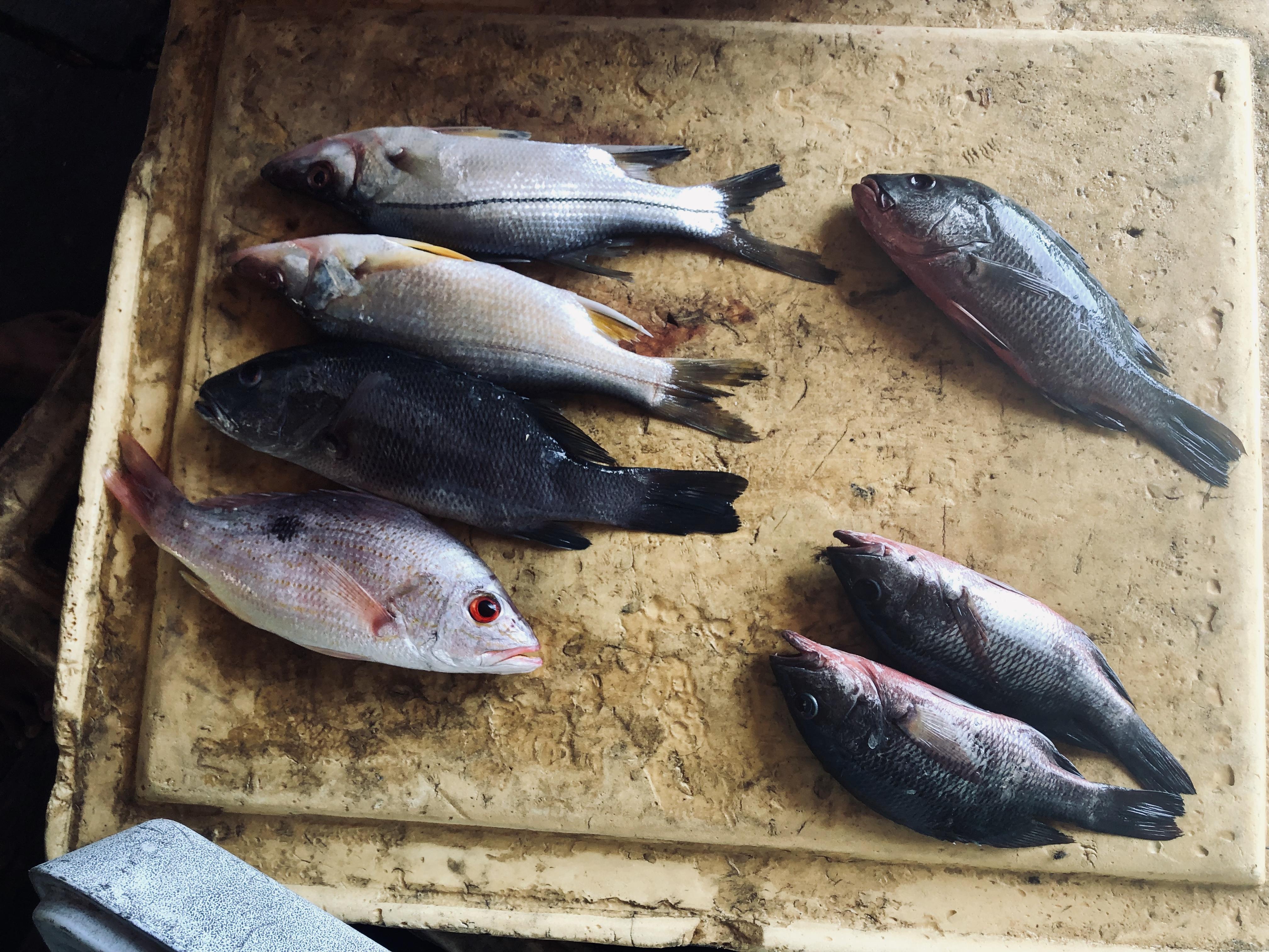 Fresh Fish waiting to fry